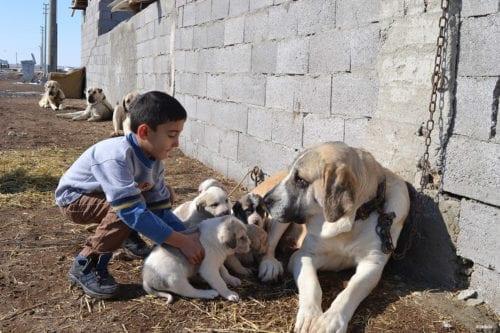 """AKSARAY, TURKEY- """"Put him down kid"""""""