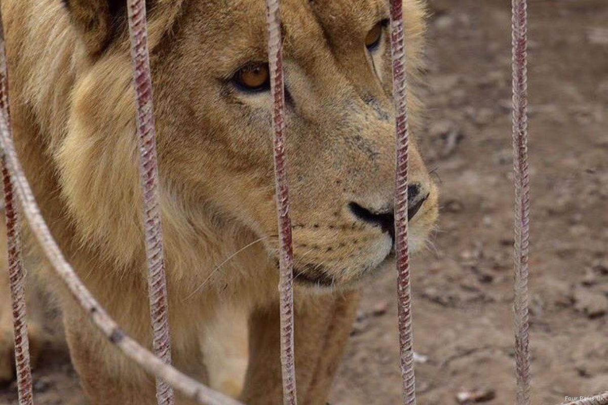 Mosul zoo's last two animals reach safer ground in Jordan