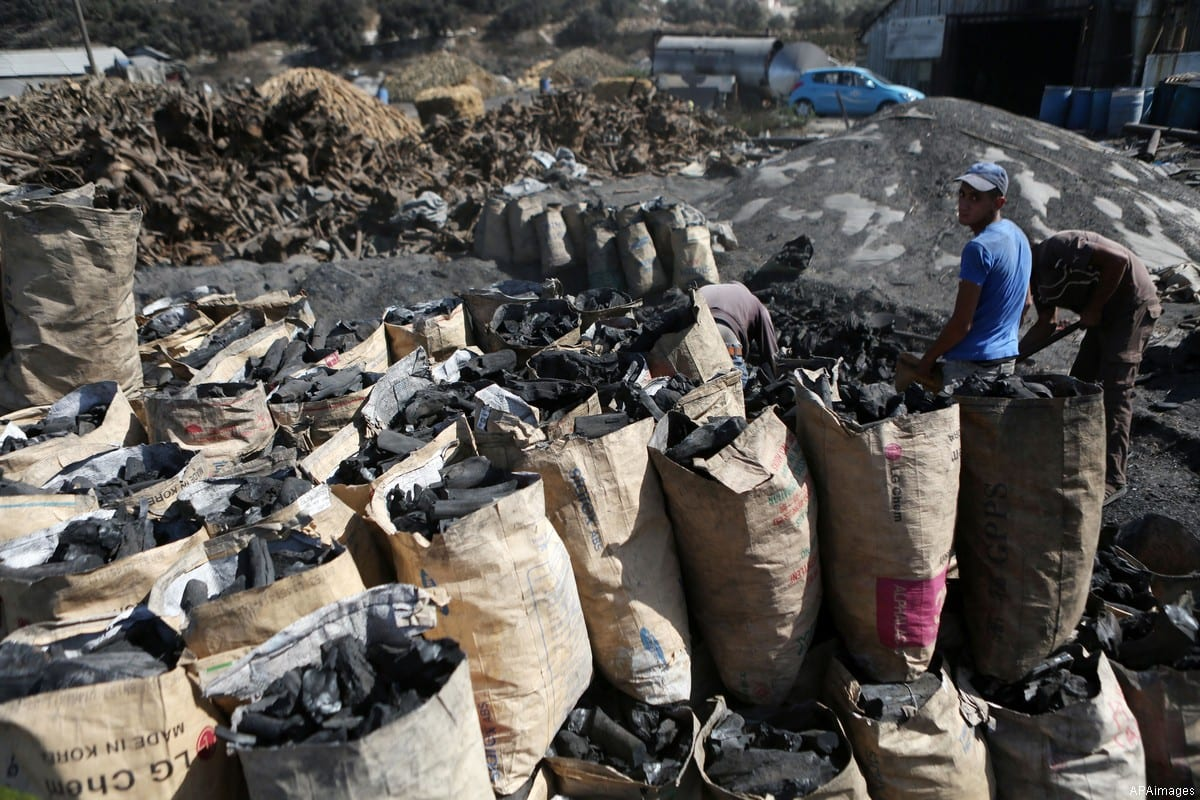 Palestinian workers collect a coal at a work field in the West Bank city of Jenin on Sept. 21, 2016. [Photo by Shadi Hatem / APAimages]