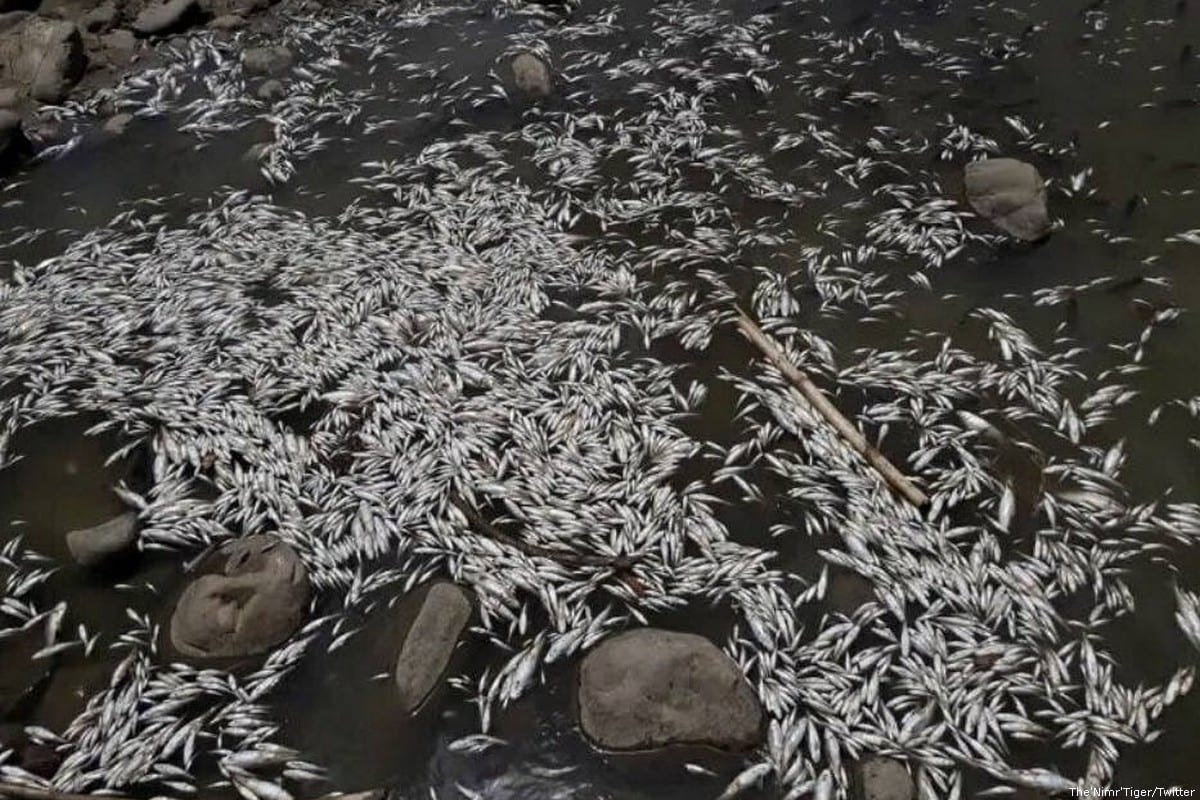 Dead fish can be seen in Iraq after the water became contaminated on 2 June 2018 [The'Nimr'Tiger/Twitter]