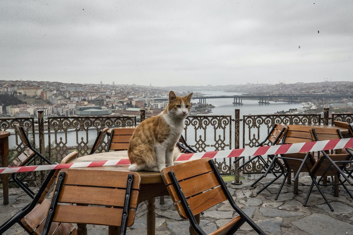 A stray cat sits on a table as Pierre Loti is empty after authorities urging people to stay at their homes as part of preventive measures against new type of coronavirus (COVID-19) in Istanbul, Turkey on 26 March 2020. [Şebnem Coşkun - Anadolu Agency]