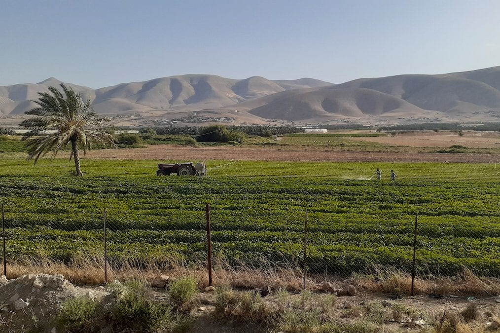 General view of Jordan valley [Fareed Taamallah]