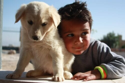 A street dog at the Palestinian Animal League shelter, a charity that deals with animal welfare in Palestine, 17 July 2020 [Palestinian Animal League]