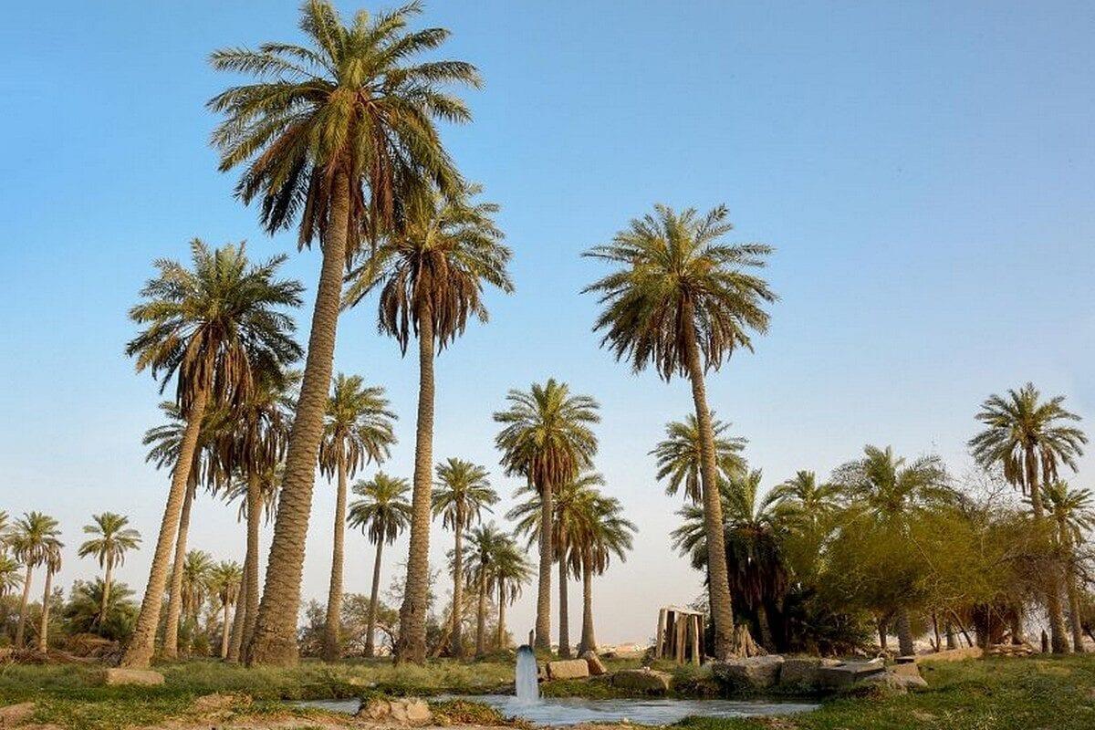 Saudi Arabia's Al-Ahsa Oasis, 9 October 2020 [Saudi Press Agency]